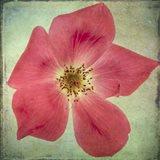 Lush Vintage Florals VII