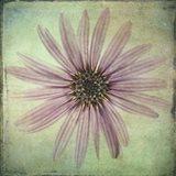 Lush Vintage Florals VIII