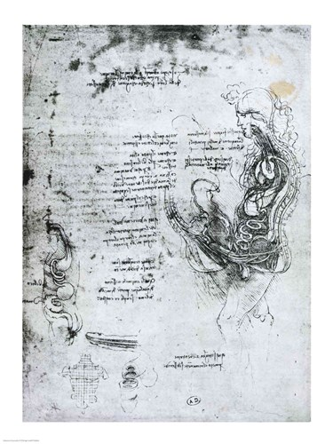 Coition of Hemisected Man and Woman Poster by Leonardo Da Vinci for $32.50 CAD