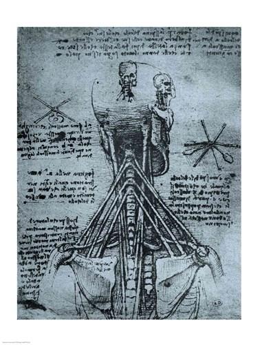 Bone Structure of the Human Neck and Shoulder Poster by Leonardo Da Vinci for $32.50 CAD