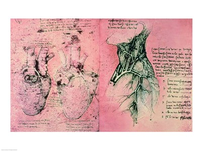 Anatomical drawing of hearts and blood vessels Poster by Leonardo Da Vinci for $67.50 CAD