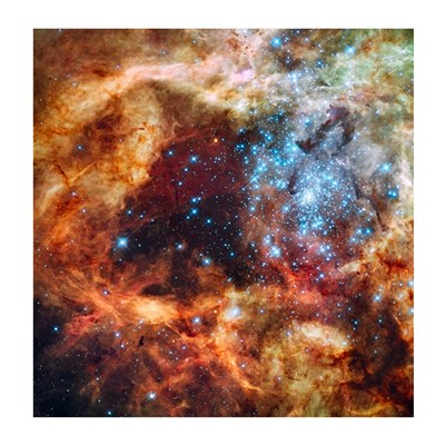 A Hubble Space Telescope image of the R136 Super Star Cluster Poster by Unknown for $27.50 CAD