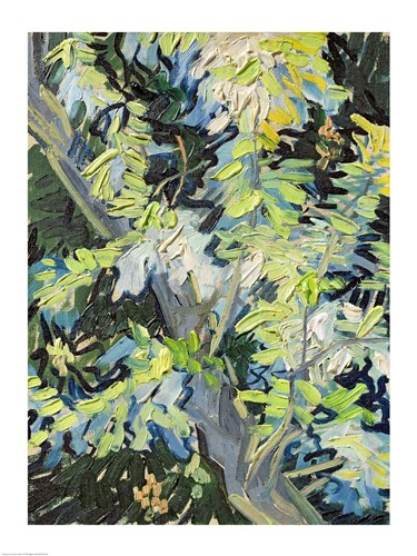 Acacia in Flowe Poster by Vincent Van Gogh for $32.50 CAD