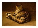 Recumbent Cat, 1898
