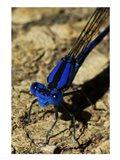 Springwater Dragonfly