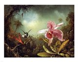 Orchid with Two Hummingbirds 1871
