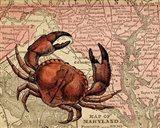 Maryland's Jumbo Crabs
