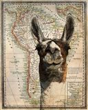 South America Llama Map