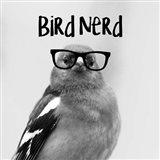 Bird Nerd - Chaffinch