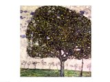The Apple Tree II, 1916