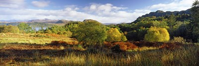 Autumn Rrees at Loch Carron, Scotland Poster by Panoramic Images for $80.00 CAD