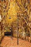 Esplanade des Quinconces park in autumn, Bordeaux, Gironde, Aquitaine, France