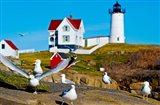 Seagulls at Nubble Lighthouse, Cape Neddick, York, Maine, USA