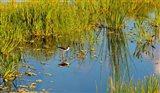 Reflection of a bird on water, Boynton Beach, Florida, USA