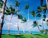 Palm trees Turkey