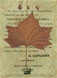 Leaf Study II