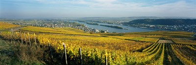 Vineyards near a town, Rudesheim, Rheingau, Germany Poster by Panoramic Images for $86.25 CAD