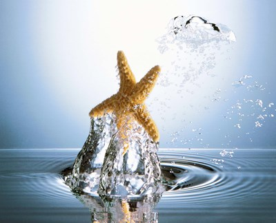 Starfish rising on water bubble toward bright light Poster by Panoramic Images for $92.50 CAD