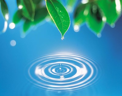 Green leaves dripping water into perfect circles below Poster by Panoramic Images for $60.00 CAD