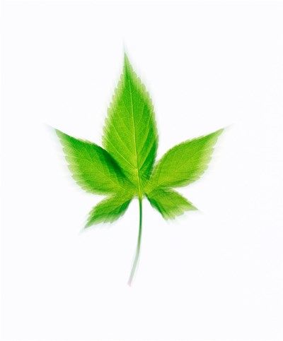 Star Shaped Green Leaf On Beige Background Poster by Panoramic Images for $61.25 CAD