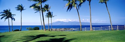 Palm trees at the coast, Ritz Carlton Hotel, Kapalua, Molokai, Maui, Hawaii, USA Poster by Panoramic Images for $86.25 CAD