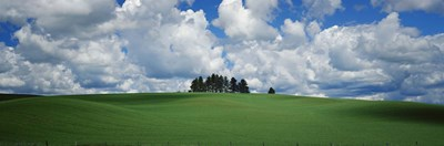 Trees on the top of a hill, Palouse, Whitman County, Washington State, USA Poster by Panoramic Images for $86.25 CAD