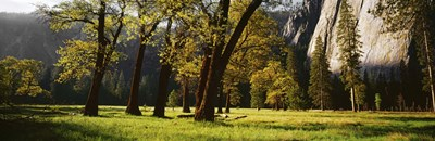 Trees near the El Capitan, Yosemite National Park, California, USA Poster by Panoramic Images for $71.25 CAD