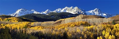 USA, Colorado, Rocky Mountains, aspens, autumn Poster by Panoramic Images for $86.25 CAD
