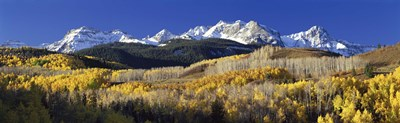 USA, Colorado, Rocky Mountains, aspens, autumn Poster by Panoramic Images for $71.25 CAD