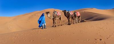 Tuareg man leading camel train in desert, Erg Chebbi Dunes, Sahara Desert, Morocco Poster by Panoramic Images for $86.25 CAD