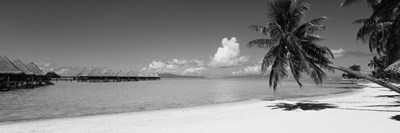 Moana Beach (black and white), Bora Bora, Tahiti, French Polynesia Poster by Panoramic Images for $71.25 CAD