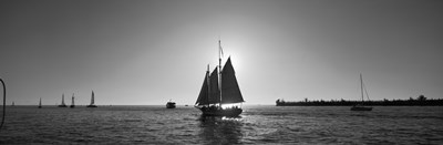 Sailboat, Key West, Florida, USA Poster by Panoramic Images for $71.25 CAD