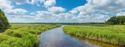 Myakka River State Park, Sarasota, Florida Poster by Panoramic Images for $86.25 CAD