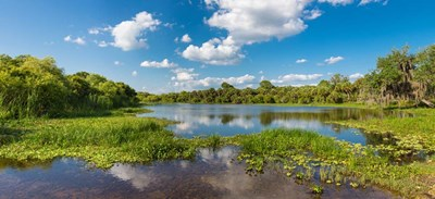 Deer Prairie Creek Preserve, Sarasota County, Venice, Florida Poster by Panoramic Images for $73.75 CAD