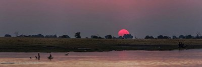 River at Dusk, Chobe River, Botswana Poster by Panoramic Images for $68.75 CAD