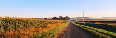 Road Along Rural Cornfield, Illinois, USA Poster by Panoramic Images for $71.25 CAD