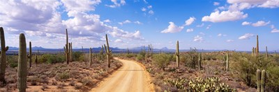 Road, Saguaro National Park, Arizona, USA Poster by Panoramic Images for $71.25 CAD