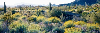 Desert AZ Poster by Panoramic Images for $90.00 CAD