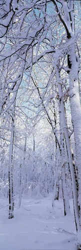Winter Forest Poster by Panoramic Images for $90.00 CAD