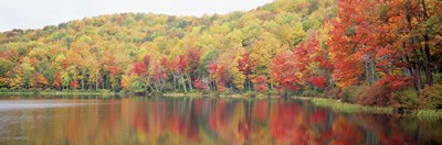 Savoy Mountain State Forest, Massachusetts, USA Poster by Panoramic Images for $71.25 CAD