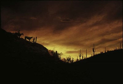 Sunset over The Sonoran Desert, AZ Poster by Panoramic Images for $61.25 CAD