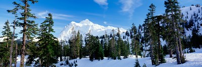 Trees on a snow covered mountain, Mt Shuksan, Mt Baker-Snoqualmie National Forest, Washington State, USA Poster by Panoramic Images for $71.25 CAD