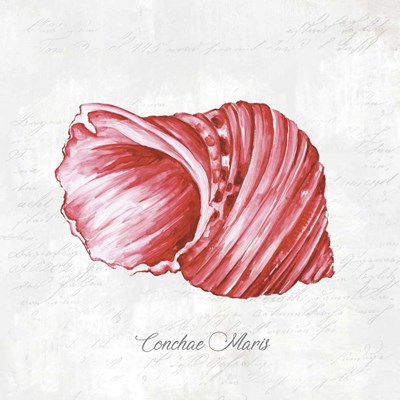 Red Seashell Poster by Eva Watts for $48.75 CAD