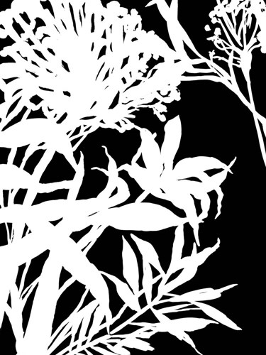 Monochrome Foliage III Poster by Posters International Studio for $41.25 CAD