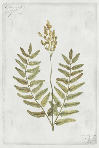 Botanical VI Poster by PI Collection for $43.75 CAD