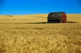 Red barn in wheat field, Palouse region, Washington, USA.