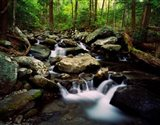 LeConte Creek, Great Smoky Mountains National Park