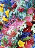 Collage of multi colored flowers