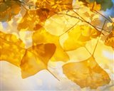 Selective focus close up of golden yellow autumn leaves