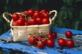 Still life of cherry tomatoes in a rectangular woven basket sitting on distressed blue painted table top